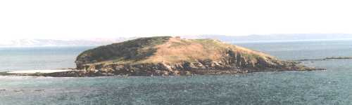 St.George's or Looe Island seen from west - the heavy weather side - buildings, daffodil fields and woods are on the other side, sheltered from the prevailing south-westerlies. Photo: R.J.Tarr 1999